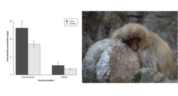 Takeshita et al 2014 - American Journal of Primatology